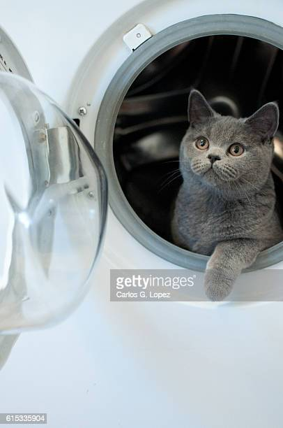 kitten in washing machine