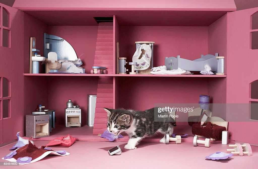 Kitten in wrecked doll's house : Stock Photo