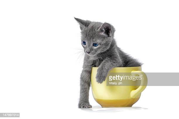Kitten is playing with cup