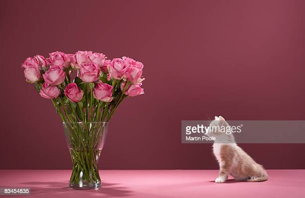 Kitten looking at vase of roses
