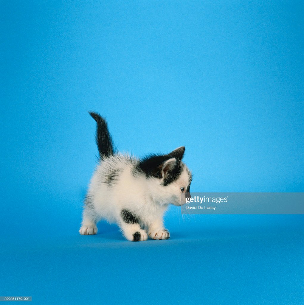 Kitten looking away, close-up : Stock Photo