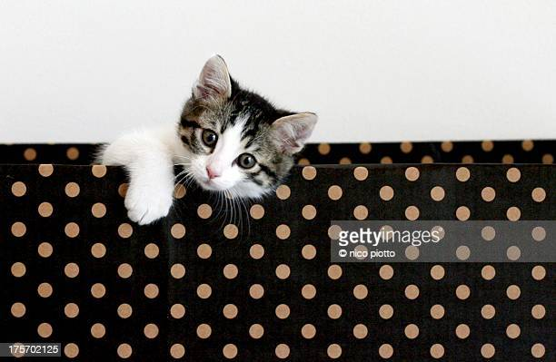 Kitten looking couriously out of a carboard box