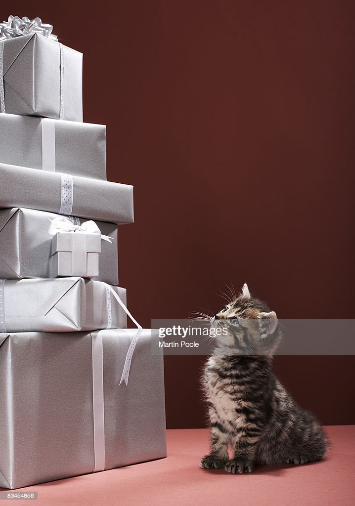 Kitten looking up at pile of presents : Stock Photo