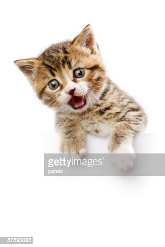kitten make a speech