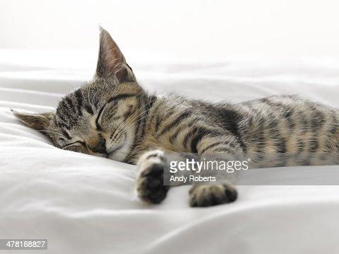 Kitten napping on blankets