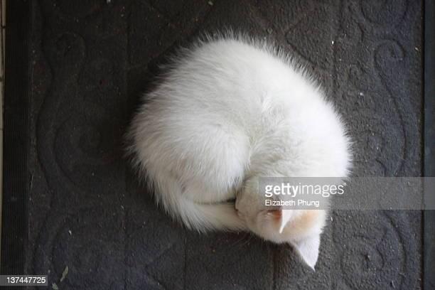 Kitten napping