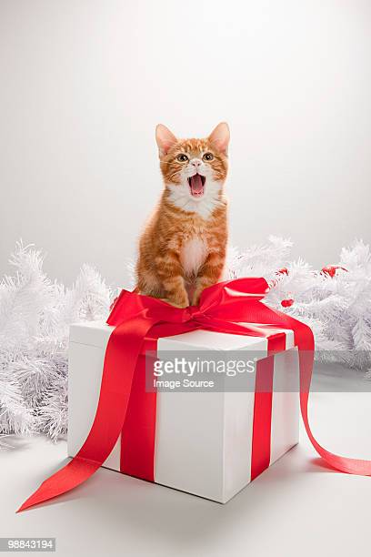 Kitten on a christmas gift box