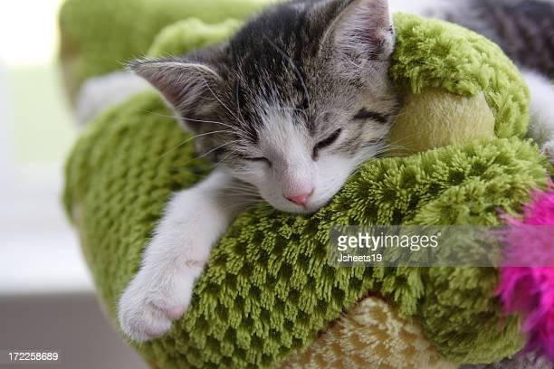 Gattino su un cuscino