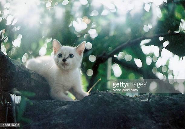Kitten on a tree