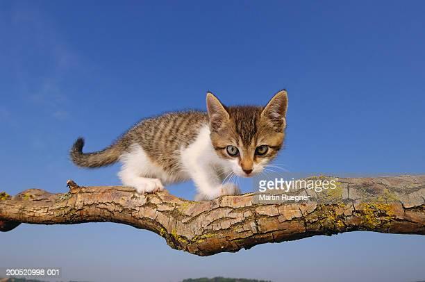 Kitten on branch, close-up