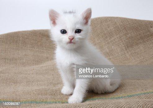 Kitten on Juta : Stock Photo
