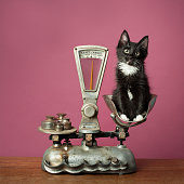 Black Tuxedo Kitten on Antique Scale