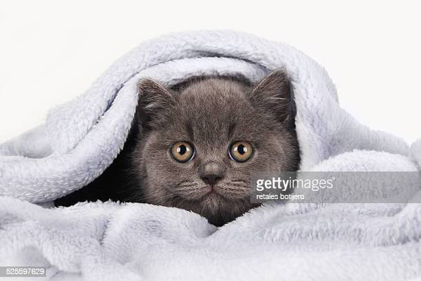Kitten on the blanket