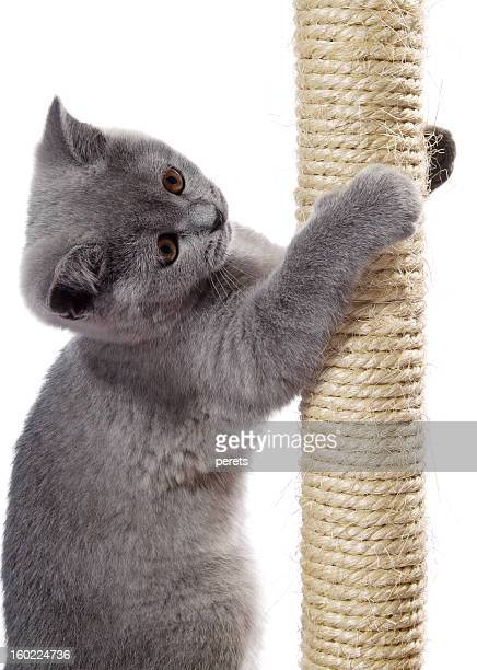 kitten on the scratching post