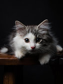 Kitten on the table