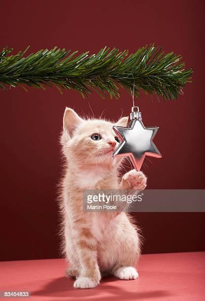 Kitten pawing Christmas decoration on tree