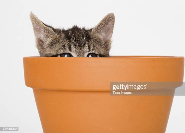 Kitten peeking out of terra cotta pot