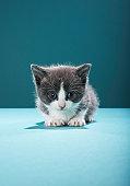 Kitten peering into camera