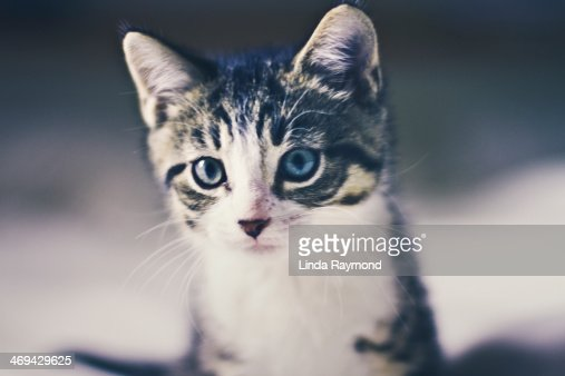 Kitten : Stock Photo