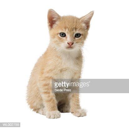 Kitten : Stock Photo