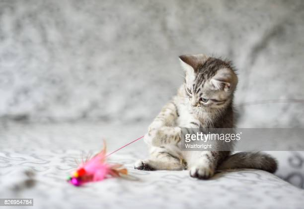 kitten play with a cat feather toy on sofa