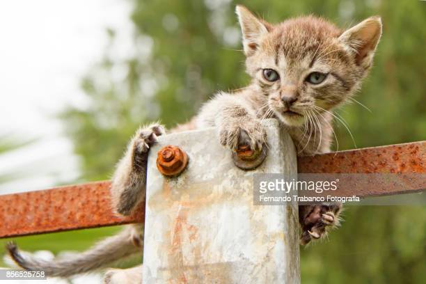 kitten playing on top of a light pole