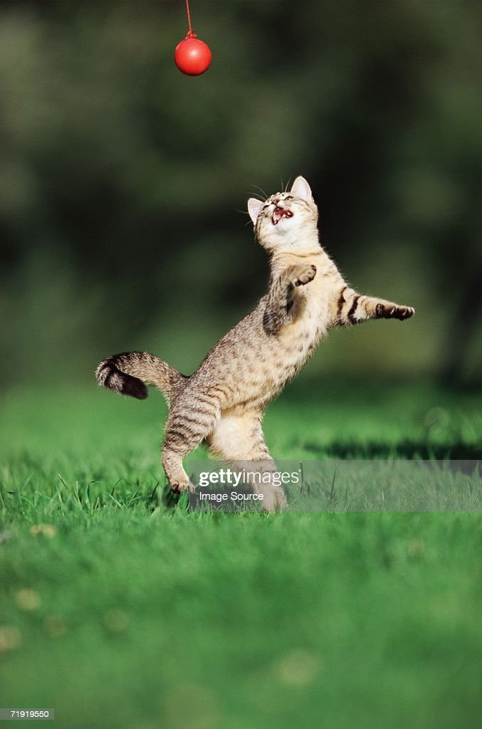 Kitten playing with a ball : Stock Photo