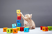 Kitten playing with building blocks