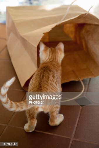 Kitten Playing With Paper Bag : Stock Photo