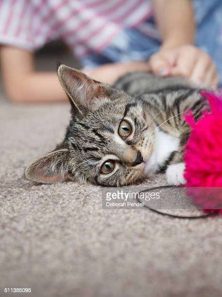 Kitten playing with pompom with girl behind