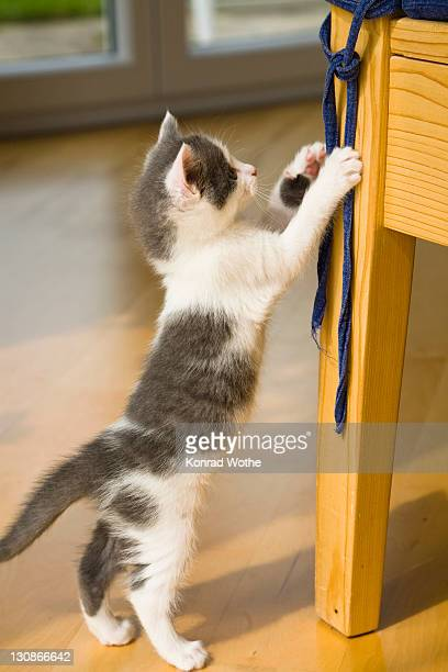 Kitten playing with ribbon on a chair
