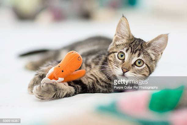 Kitten Playing with Stuffed Toy
