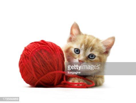 Kitten posing : Stock Photo