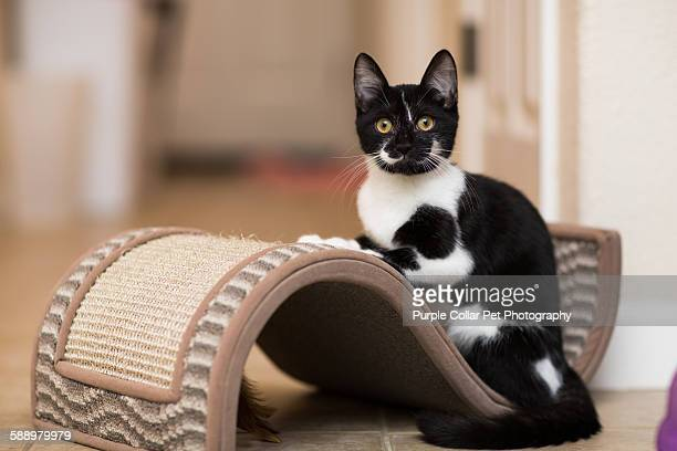 Kitten Resting on Cat Toy