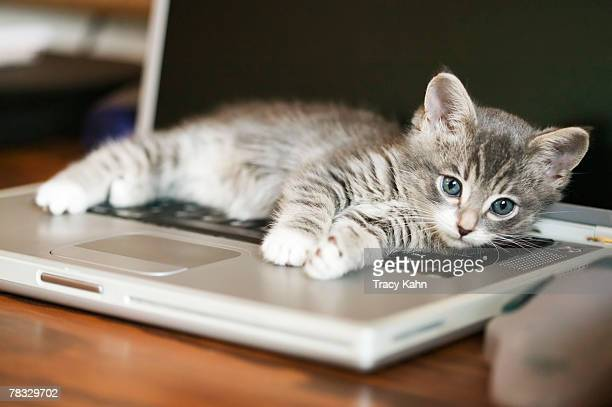 Kitten resting on laptop computer