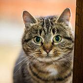 Kitten Siits At The Open Wiindow, Closeup. The Kitten Looks. Portrait Of A House Kitten.