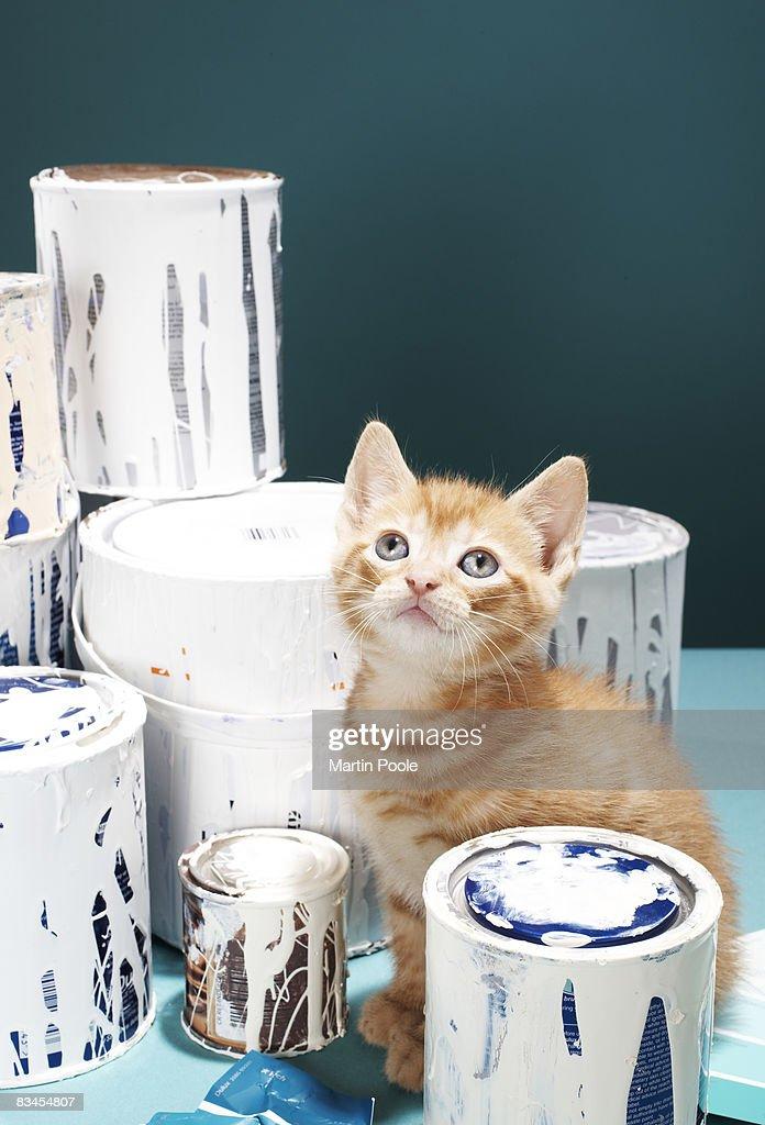 Kitten sitting amongst paint tins : Stock Photo