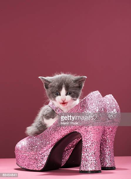 Kitten sitting in glitter shoes