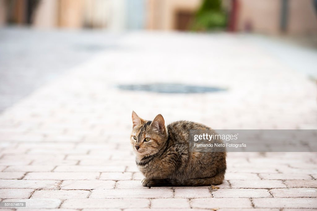 Kitten sitting in the middle of the street
