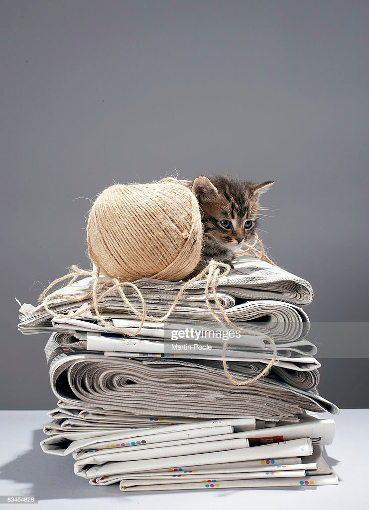 Kitten sitting on pile of newspapers : Stock Photo