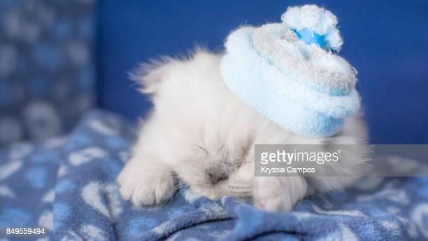 Kitten Sleeping in Warm Blanket wearing a Hat