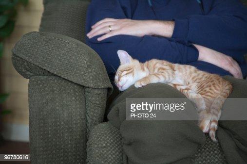 Kitten Sleeping on Lap