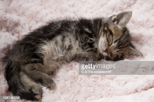 Kitten Sleeping on Towel : Stock Photo