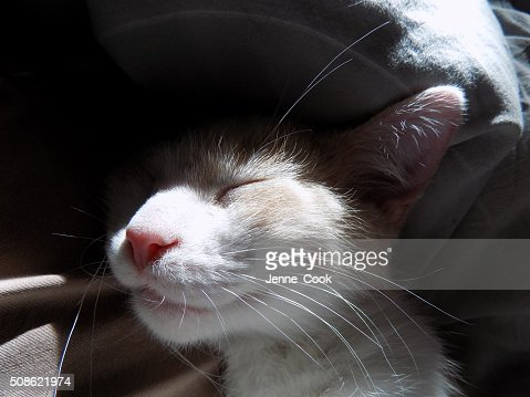 Kitten sleeping : Stock Photo