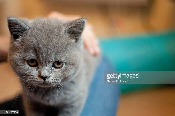 kitten staring at camera