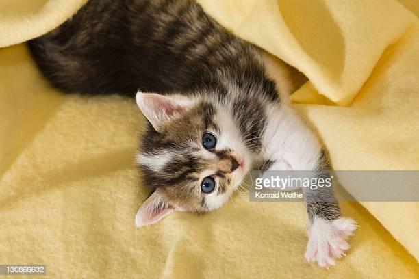 Kitten stretching