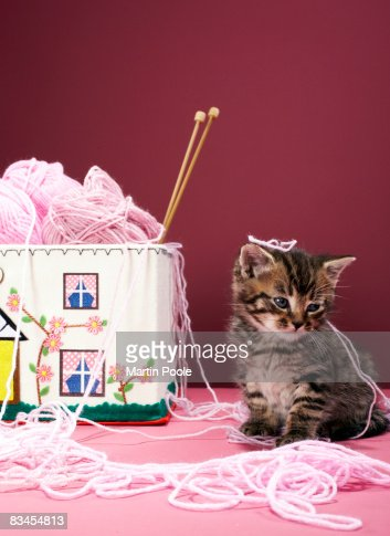 Kitten tangled in wool : Stock Photo
