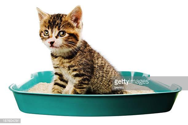 kitten toilet