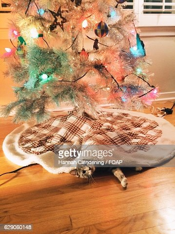 Kitten under a retro christmas tree