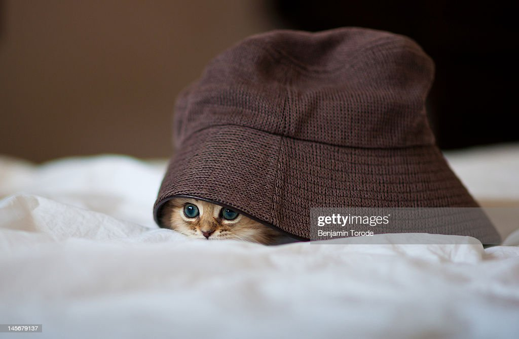 Persian kitten under over sized hat on white sheet.